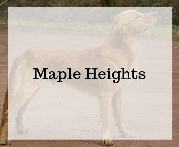 Hemsida till Kennel Maple Heights